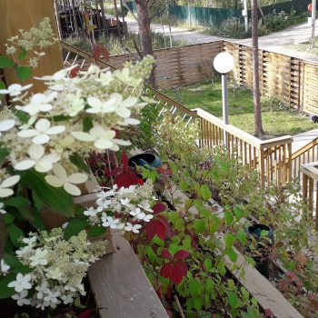 Сад на крыше фахверкового дома